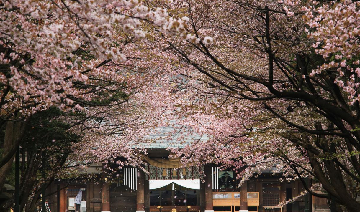 「北海道北海道神宮」的圖片搜尋結果